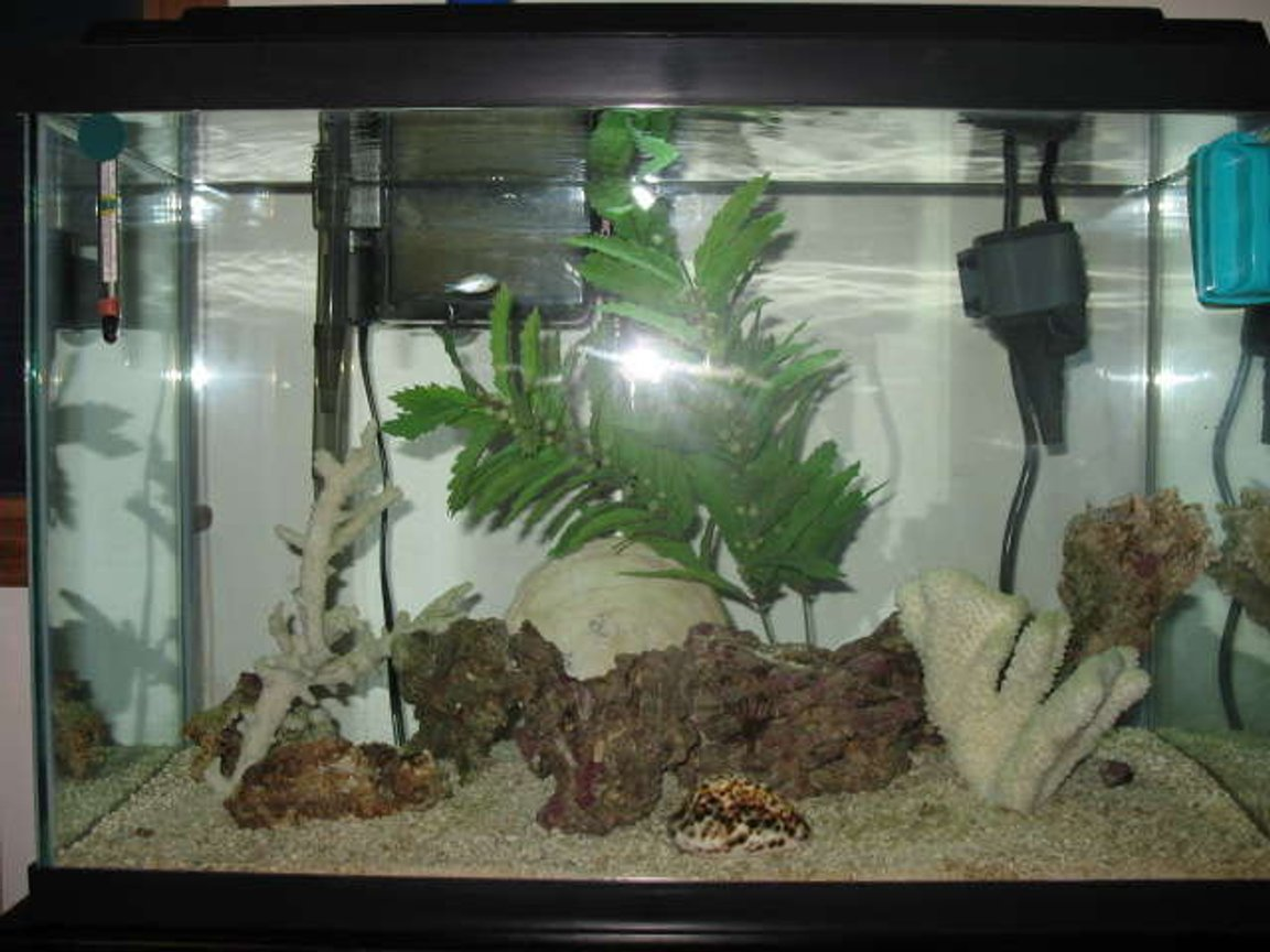 20 gallons saltwater fish tank (mostly fish, little/no live coral) - My Tank