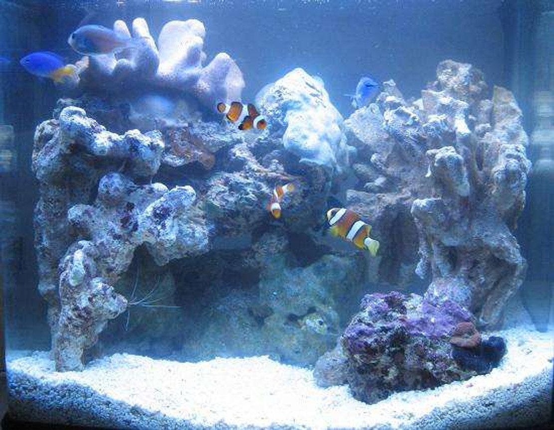 4 gallons saltwater fish tank (mostly fish, little/no live coral) - 1 WEEK OLD My 16 litre (4 gallon) reef tank : )