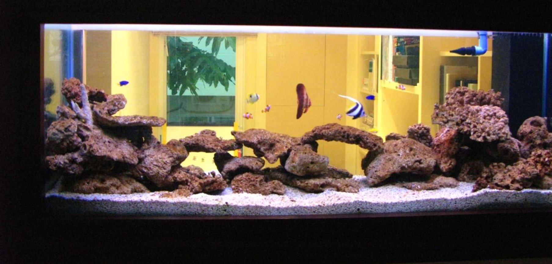 150 gallons saltwater fish tank (mostly fish, little/no live coral) - 4 Months Earlier: Saltwater Fish Tank with Coral Rock: 1 x Batfish, 4 x Clown Fish, 2 x Blue Damsel, 1 x Moon Wrasse, 1 x Tear Drop Butterfly, 1x MaroonClown Fish, 1x Heniochus Butterfly, 1 x Blue Hippo Tang, 1 x Lemon Damsel, 1 x Red Coris Wrasse, 1 x Copper Banded Butterfly, Yellow Belly Damsel