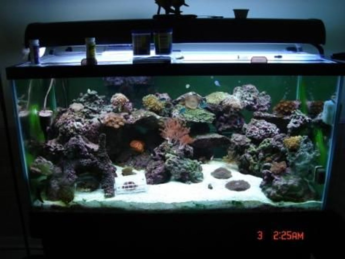 125 gallons saltwater fish tank (mostly fish, little/no live coral) - the most updates photo as of Nov. 07