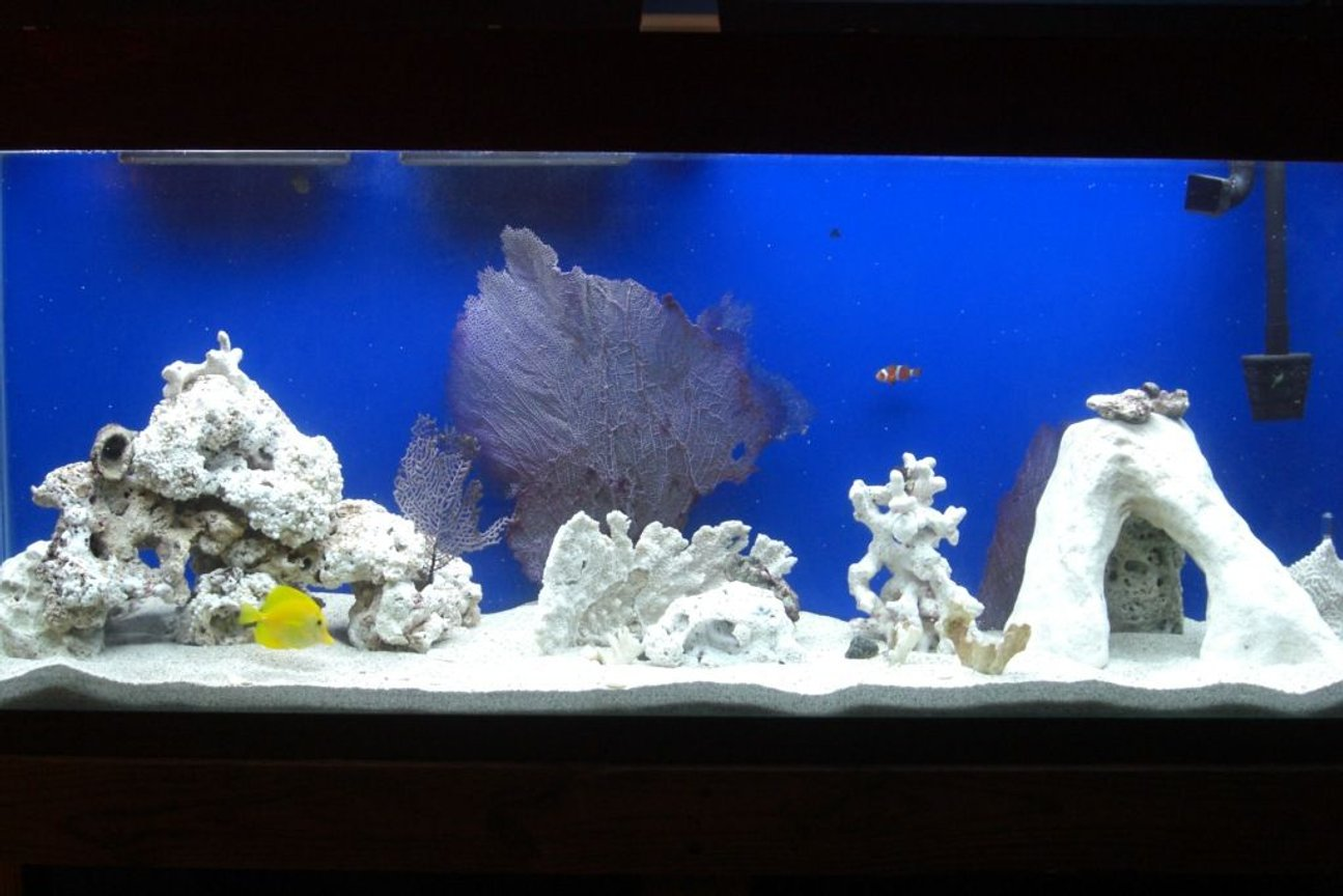 55 gallons saltwater fish tank (mostly fish, little/no live coral) - My 55g Saltwater Tank