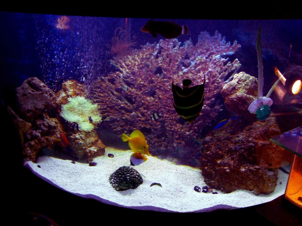 54 gallons saltwater fish tank (mostly fish, little/no live coral) - When Tank First Started Out.