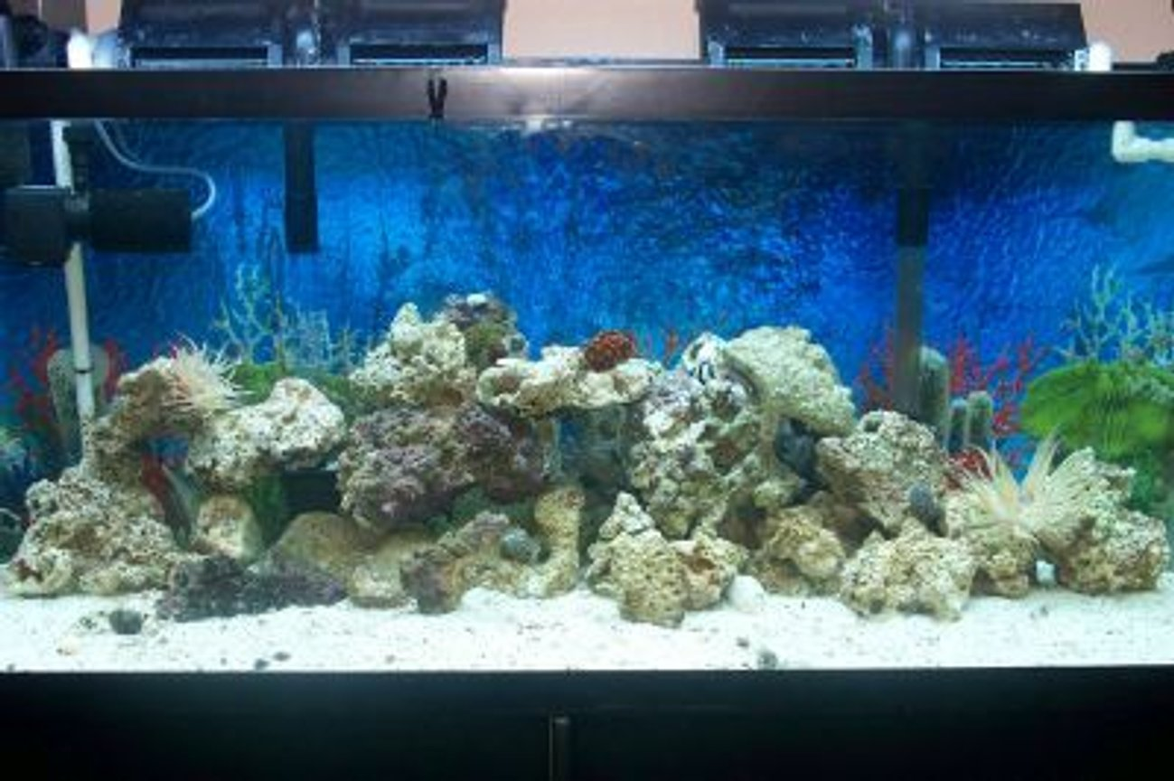55 gallons saltwater fish tank (mostly fish, little/no live coral) - 3 mos new, 55 gallon