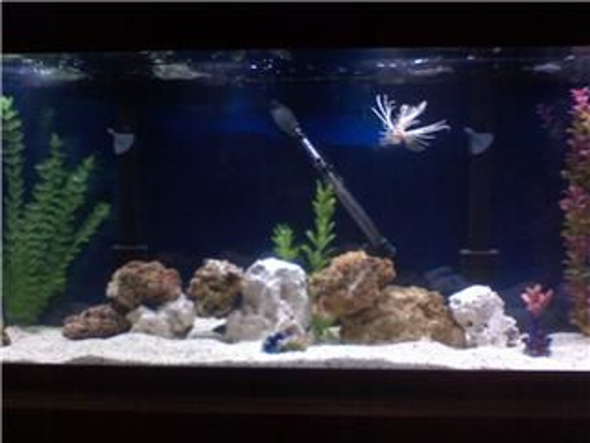 45 gallons saltwater fish tank (mostly fish, little/no live coral) - My 75 gal salwater tank