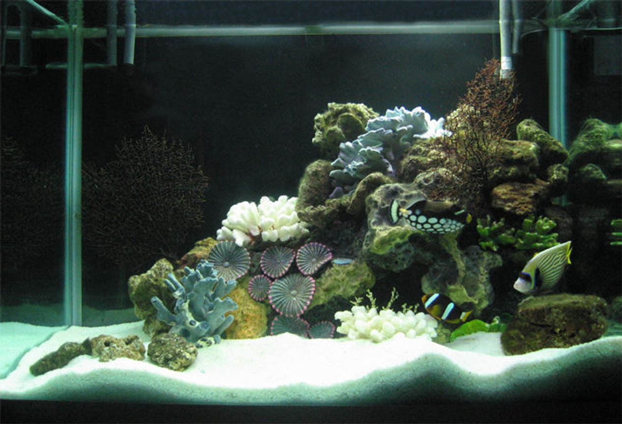 80 gallons saltwater fish tank (mostly fish, little/no live coral) - 80G with dead corals but loads of live rocks collected by hand from the nearby ocean... 700W of CFL 6500K. 4G Canister filter with activated carbon & seachem mix, protein skimmer, UV sterilizer, 2 Power filters (4000 l/ph). That's about it.