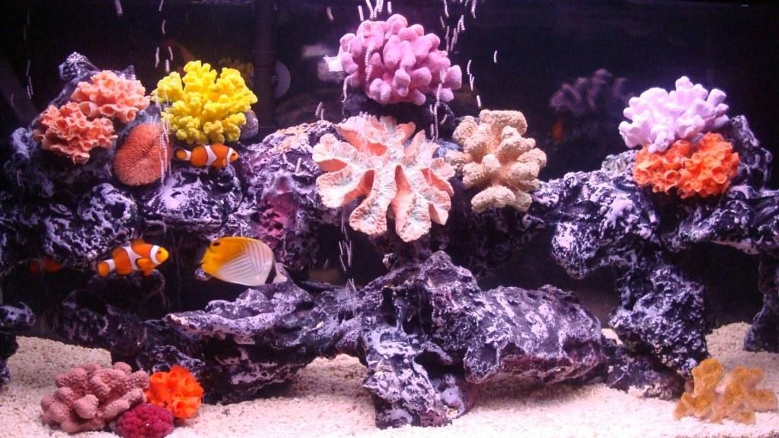 30 gallons saltwater fish tank (mostly fish, little/no live coral) - run mellow...run....