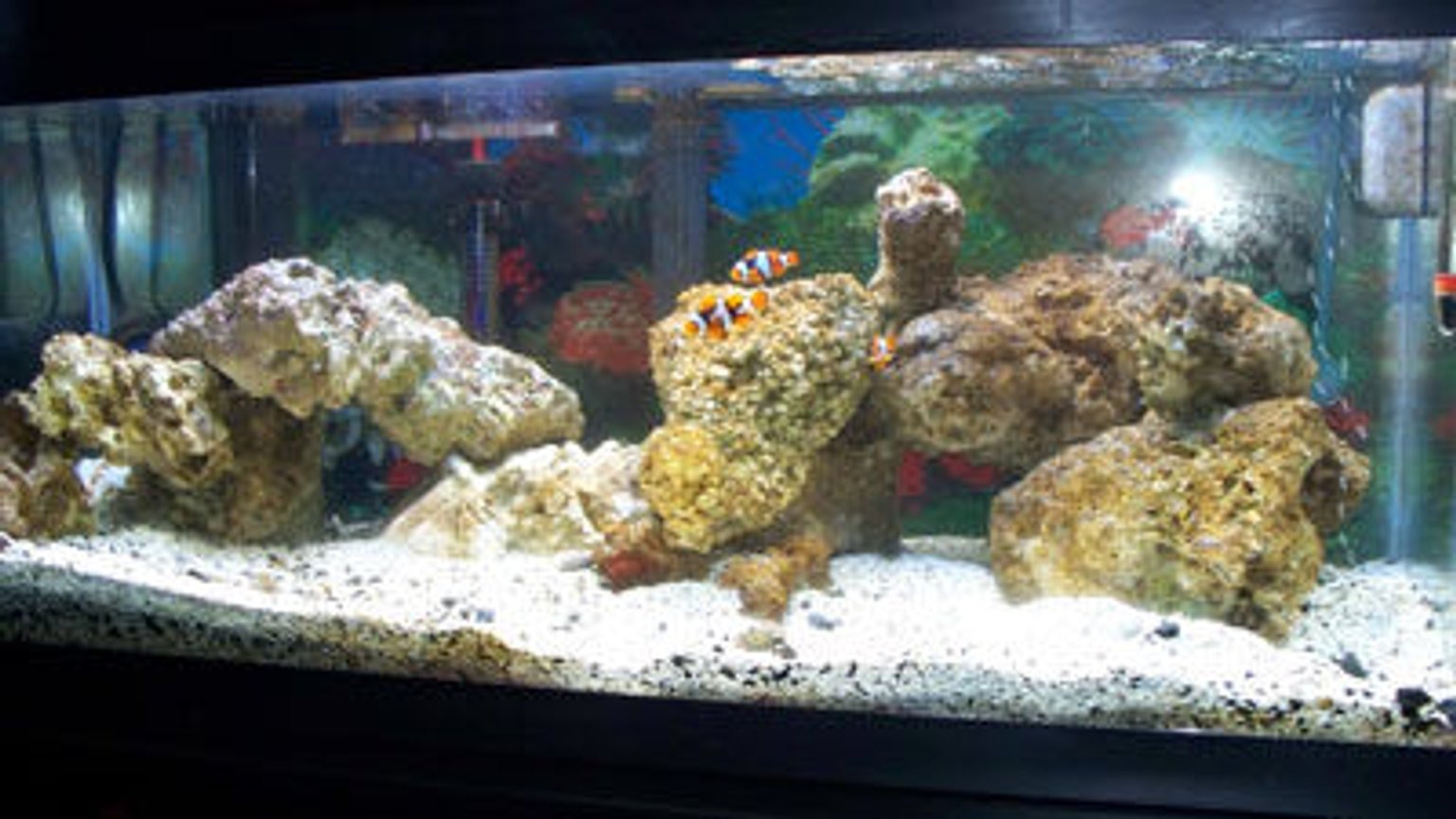 20 gallons saltwater fish tank (mostly fish, little/no live coral) - new live rock 5.08