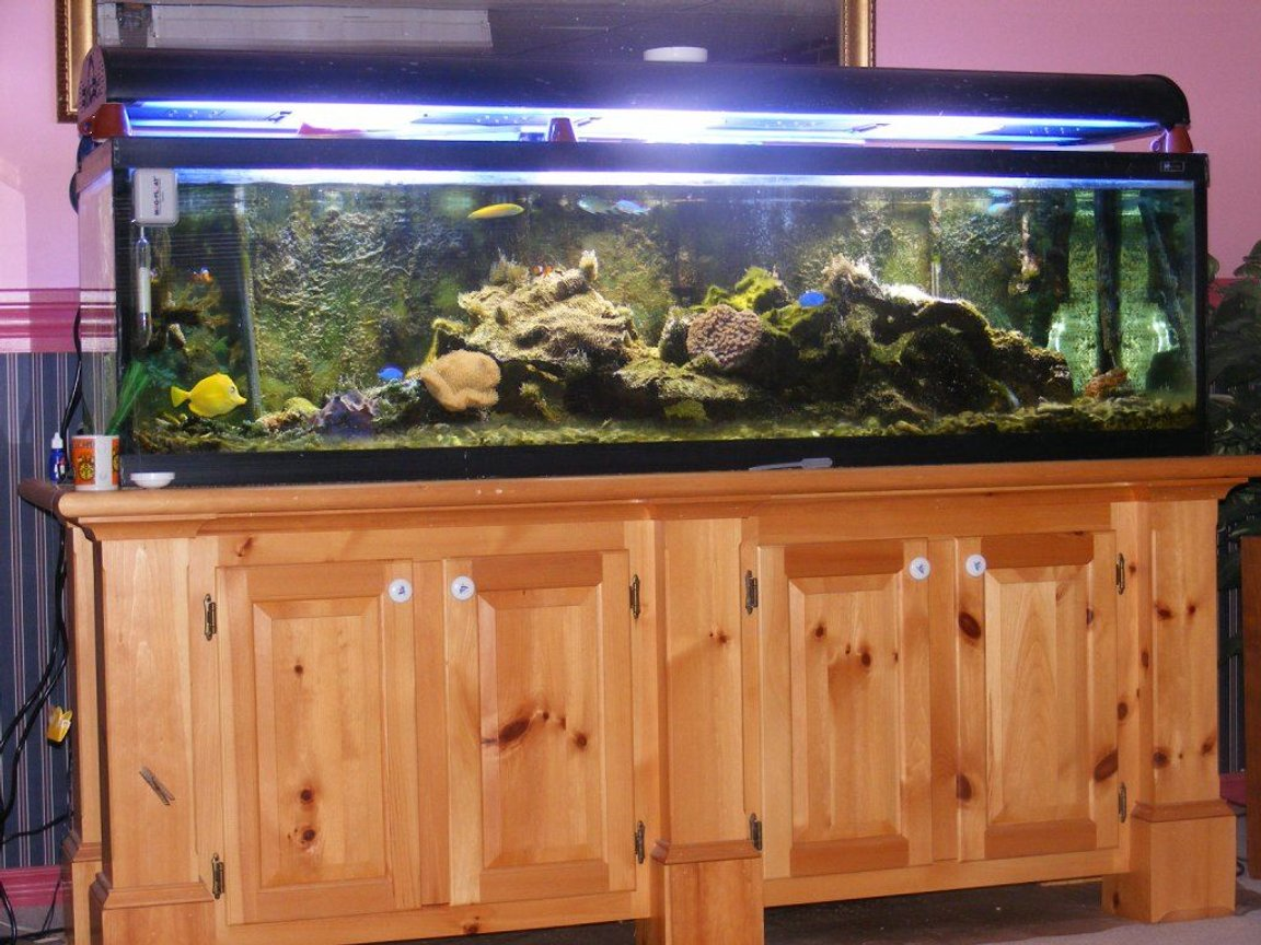 80 gallons saltwater fish tank (mostly fish, little/no live coral) - father in-law's 150 gal tank