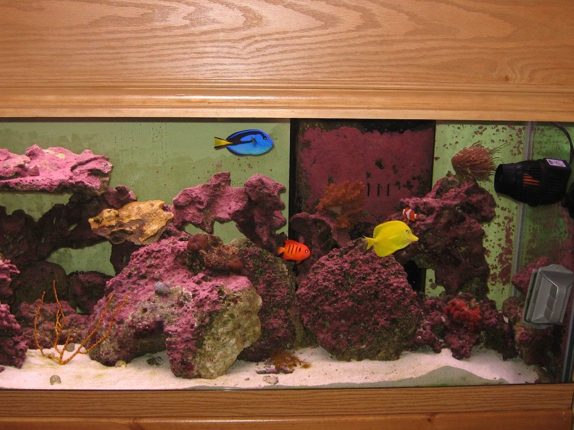 125 gallons saltwater fish tank (mostly fish, little/no live coral) - Right Side June 2008