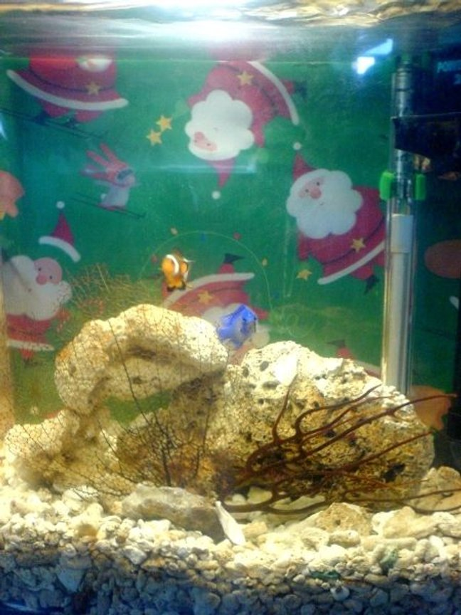 5 gallons saltwater fish tank (mostly fish, little/no live coral) - A pic for 2007 Xmas holidays...