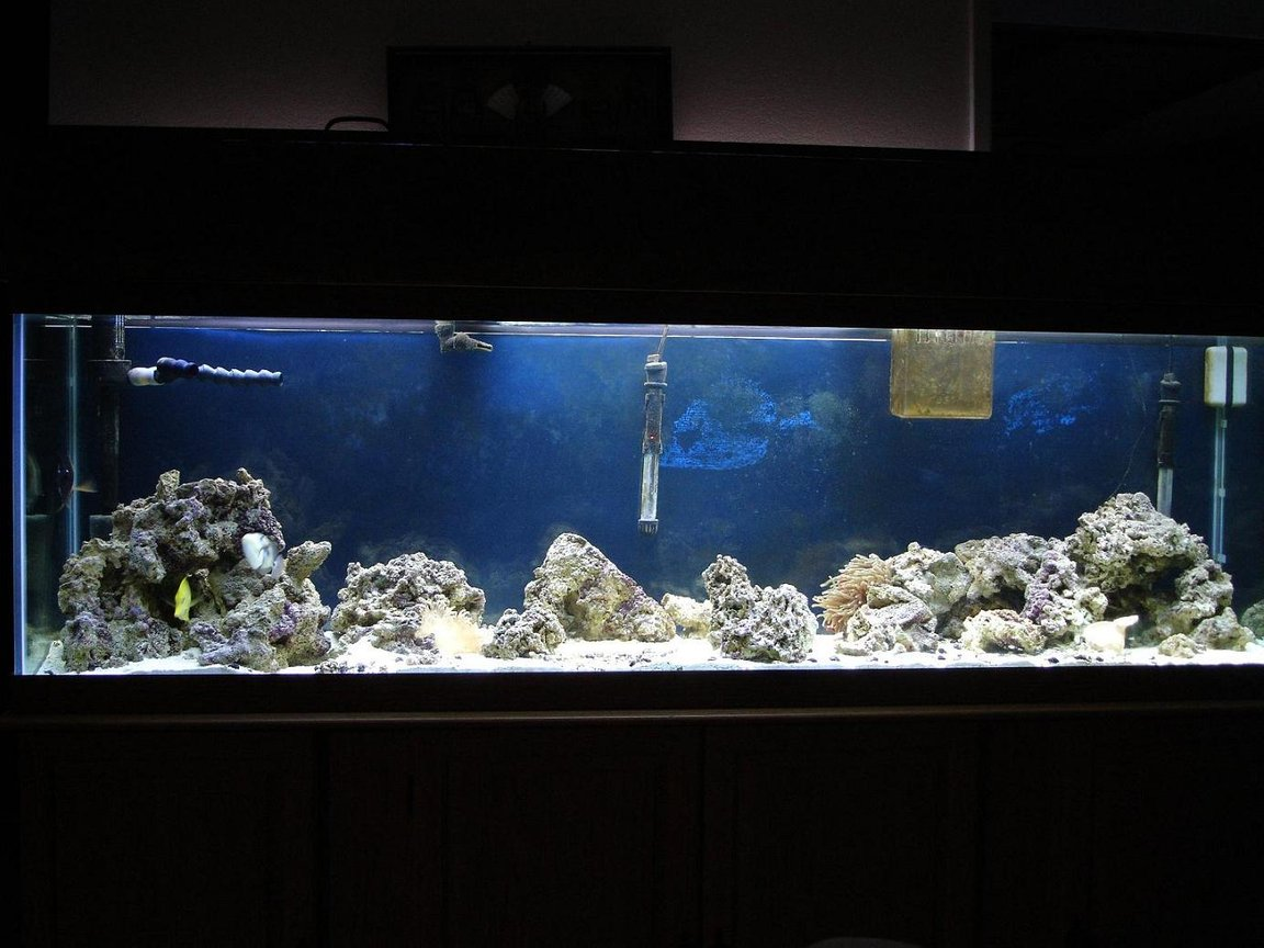 125 gallons saltwater fish tank (mostly fish, little/no live coral) - 125 gal tank with 88 lbs of live rock, 90lbs live sand, 20 gal wet/dry filter, protien skimmer, 110 powerhead, and 4-50 watt compact flouresents.2 maroon clownfish, humu humu trigger, niger trigger, scopas tang, yellow tang, 1 long tenticle anemone, 1 rose anemone, and 200 snails.