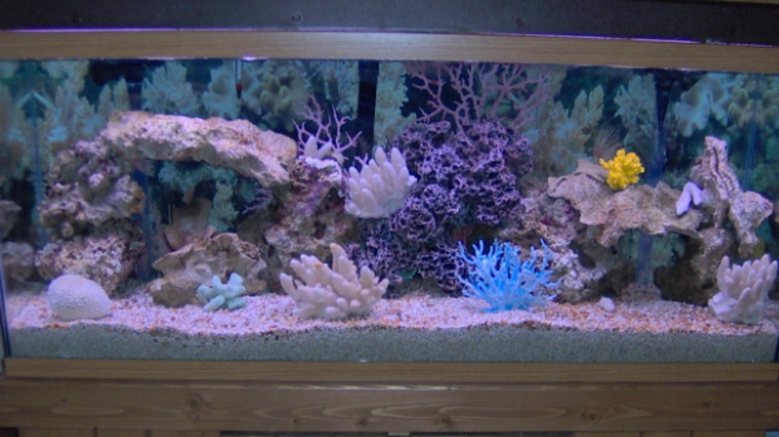55 gallons saltwater fish tank (mostly fish, little/no live coral) - New tank, no fish yet