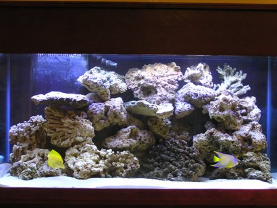 90 gallons saltwater fish tank (mostly fish, little/no live coral) - Here is the upgrade