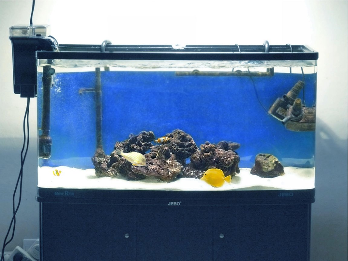 60 gallons saltwater fish tank (mostly fish, little/no live coral) - My tank 2