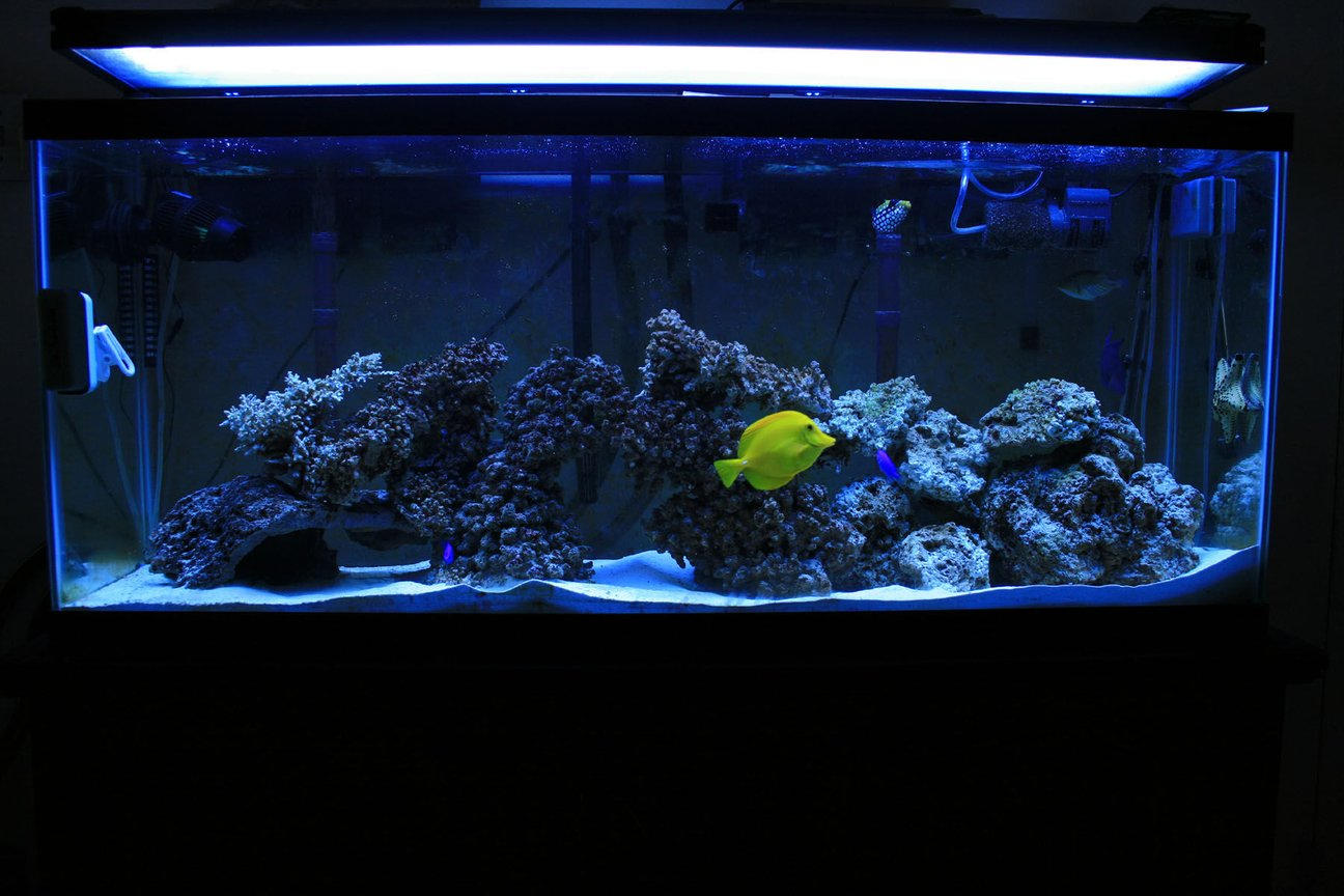 100 gallons saltwater fish tank (mostly fish, little/no live coral) - my new tank