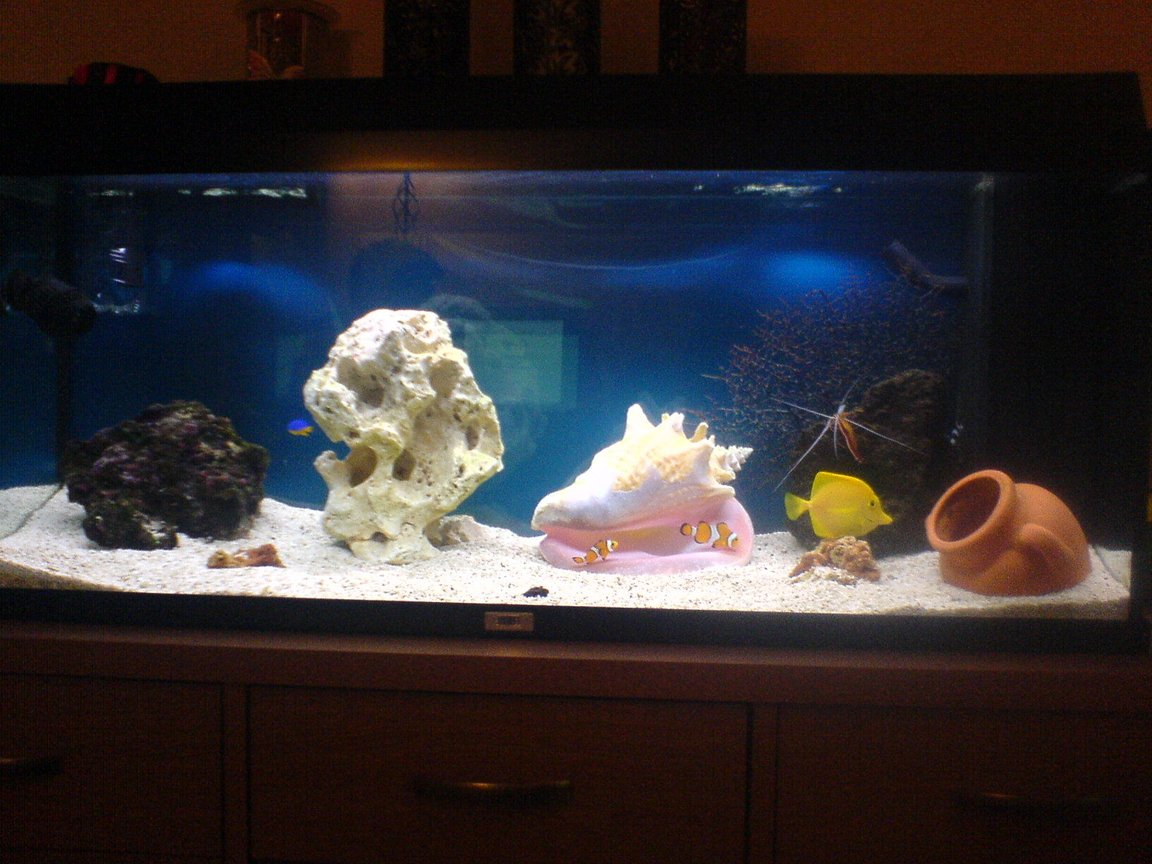 30 gallons saltwater fish tank (mostly fish, little/no live coral) - 30 gallon marine