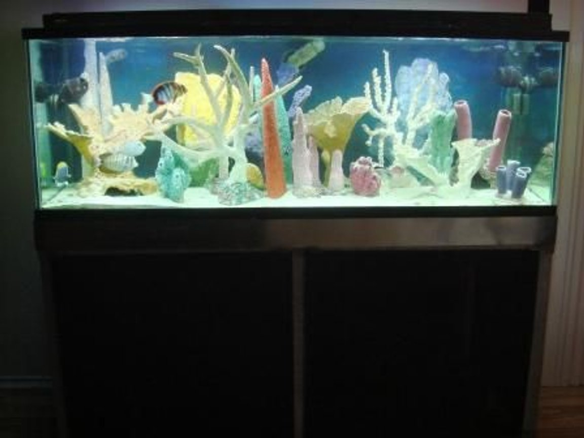 180 gallons saltwater fish tank (mostly fish, little/no live coral) - 180g Fish Only