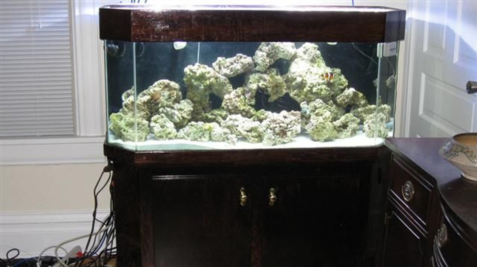 75 gallons saltwater fish tank (mostly fish, little/no live coral) - This was my first week Up and Running
