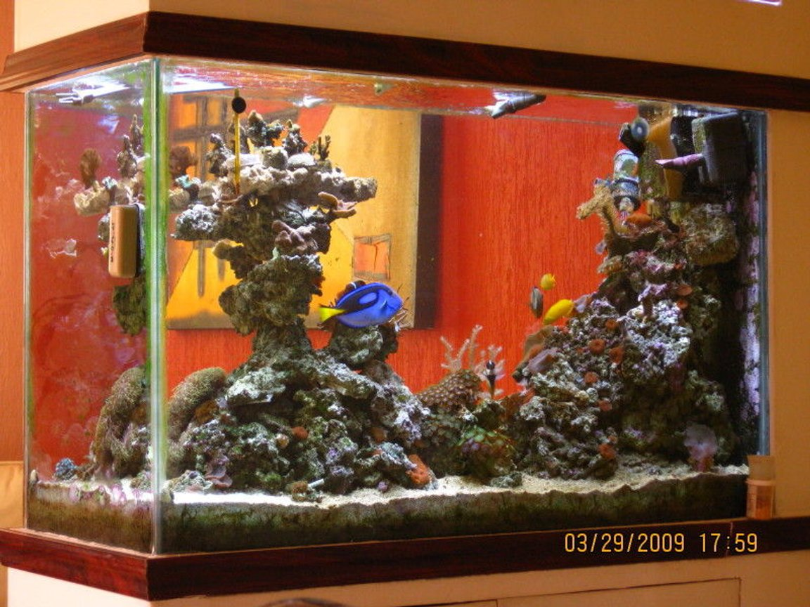 90 gallons saltwater fish tank (mostly fish, little/no live coral) - Another from ther rear view