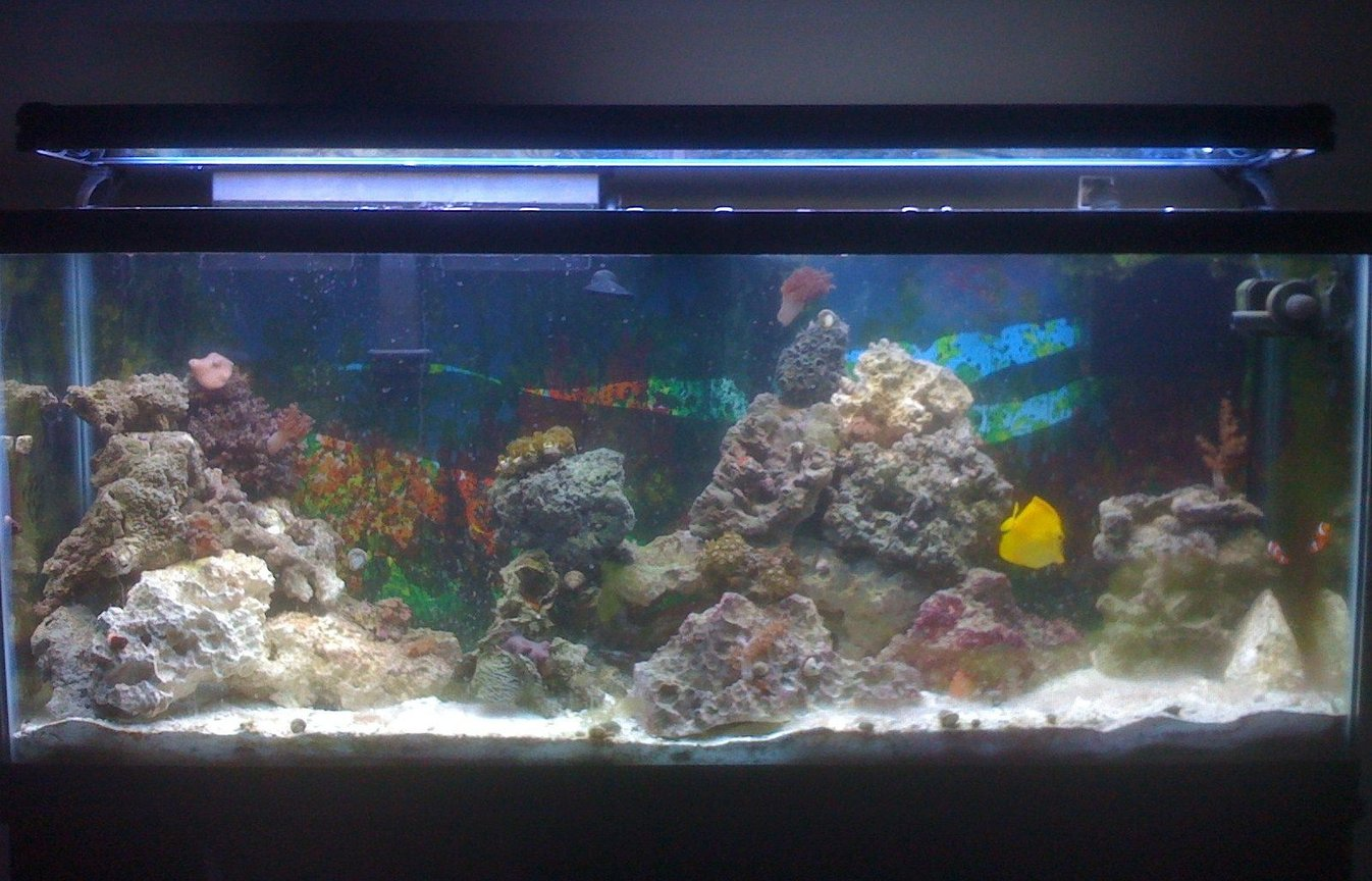 55 gallons saltwater fish tank (mostly fish, little/no live coral) - main view