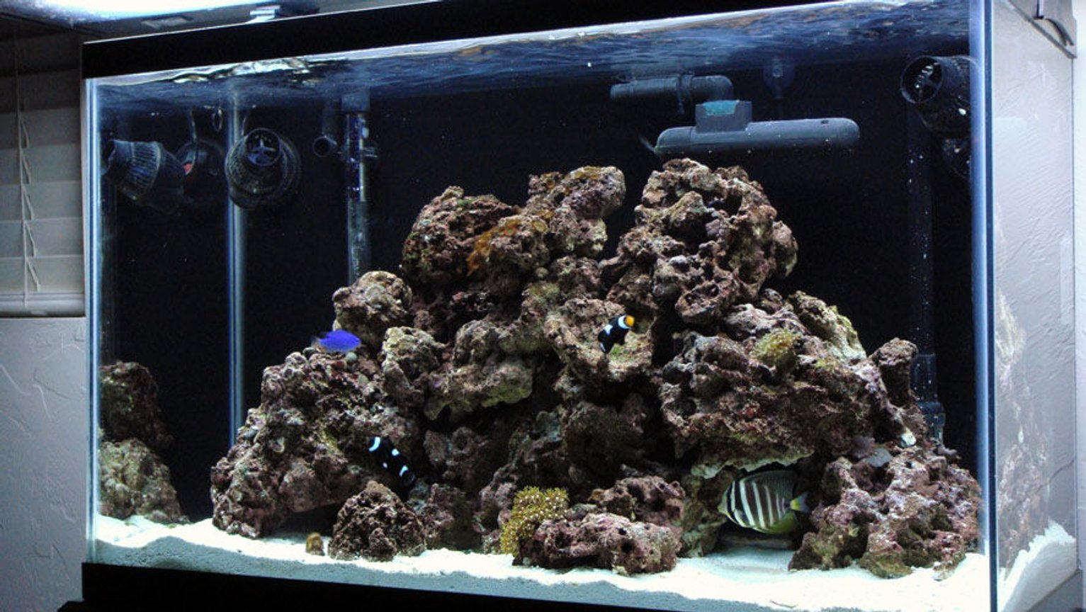 29 gallons saltwater fish tank (mostly fish, little/no live coral) - Just downgraded from a 75 gal. and put everything is this 29 Gallon - Button Polyps, Green Star Polyps, Green Ricordia, Trumpet, Frogspawn, Assorterd Mushrooms and Zoos. All are still fairly small as they were bought as frags and are only a couple of months old I plan to add alot more soon. Mated Pair of Black Ocellaris Clowns,a Sailfin Tang (for now) and a Blue Damsel. Cleaner Shrimp, Coral Banded Shrimp, Nassarius Snails, Nerite Snails, Hermits.
