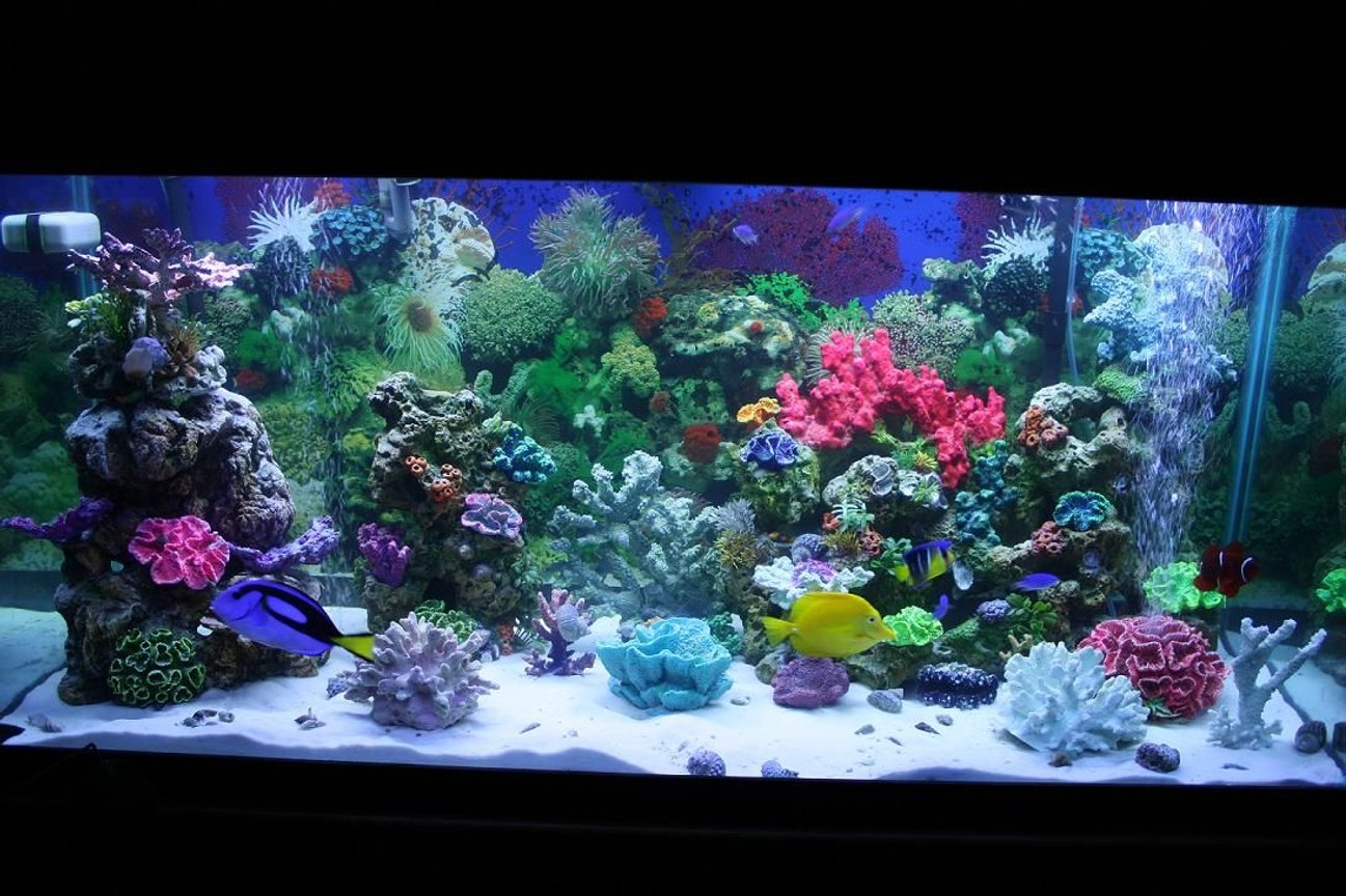 75 gallons saltwater fish tank (mostly fish, little/no live coral) - tank after rebuilding stand and adding sand and some new fish