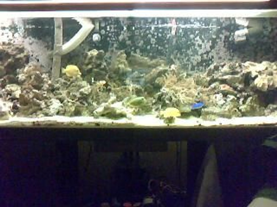 130 gallons saltwater fish tank (mostly fish, little/no live coral) - 130 gall