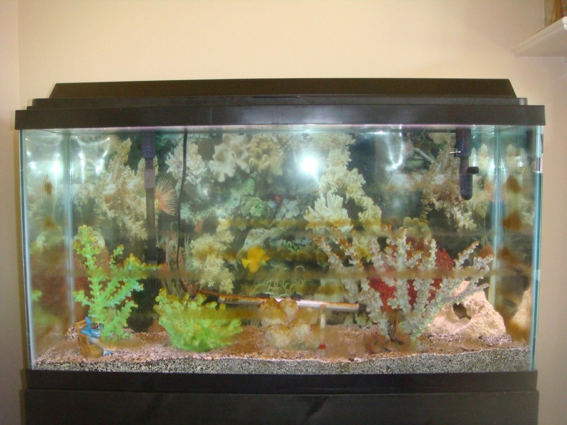 38 gallons saltwater fish tank (mostly fish, little/no live coral) - new and first tank