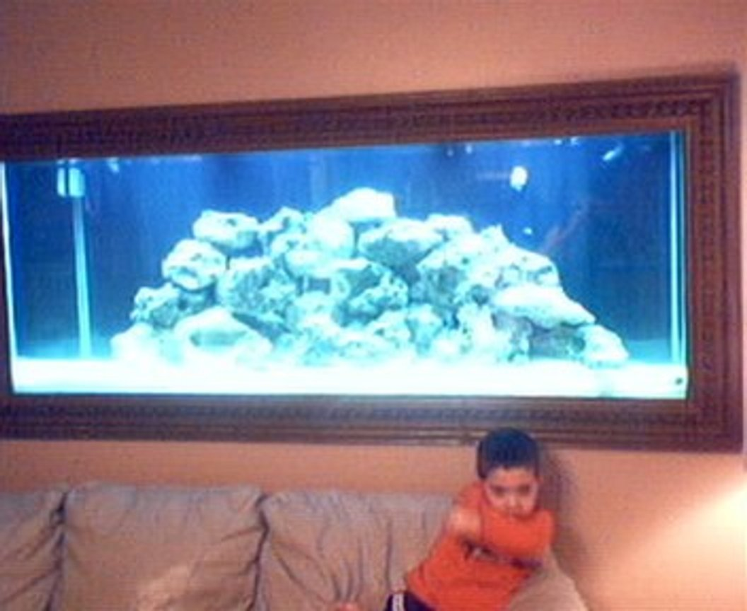 210 gallons saltwater fish tank (mostly fish, little/no live coral) - MY BOY AGAIN
