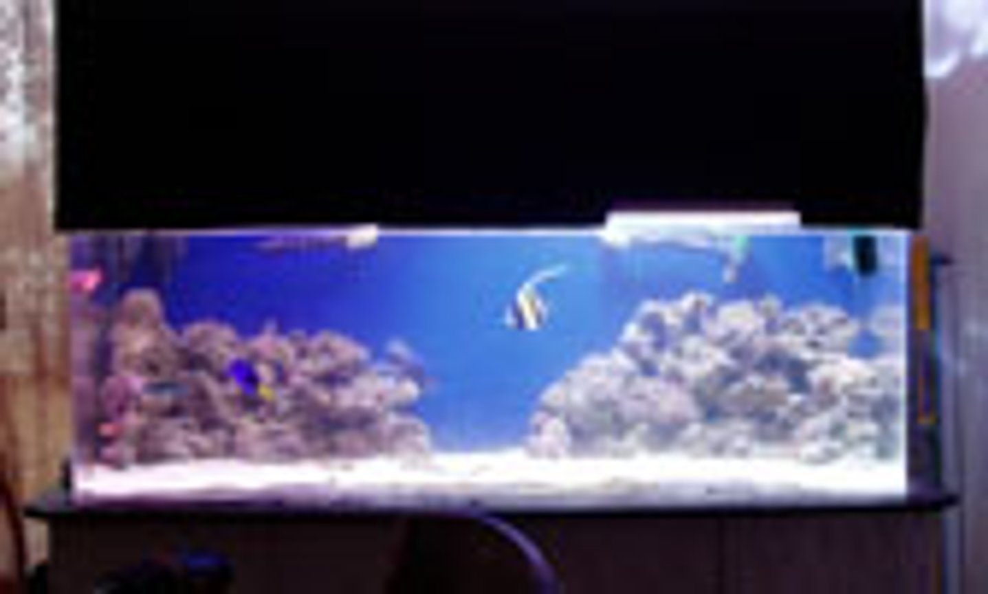 100 gallons saltwater fish tank (mostly fish, little/no live coral) - 120gal