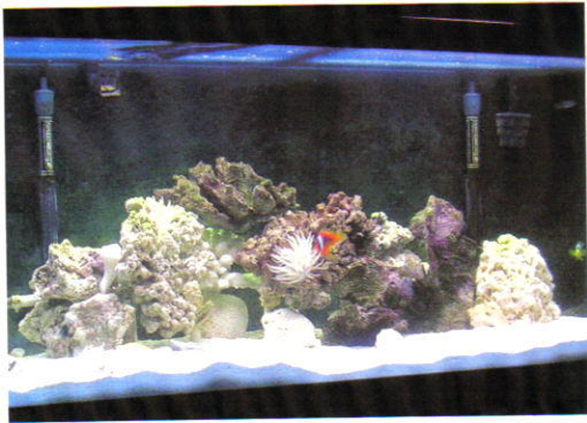 90 gallons saltwater fish tank (mostly fish, little/no live coral) - 90 gal saltwater aquarium in the works