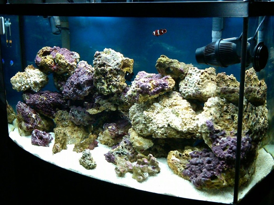 50 gallons saltwater fish tank (mostly fish, little/no live coral) - my 3 month old 50 gallon bowfront