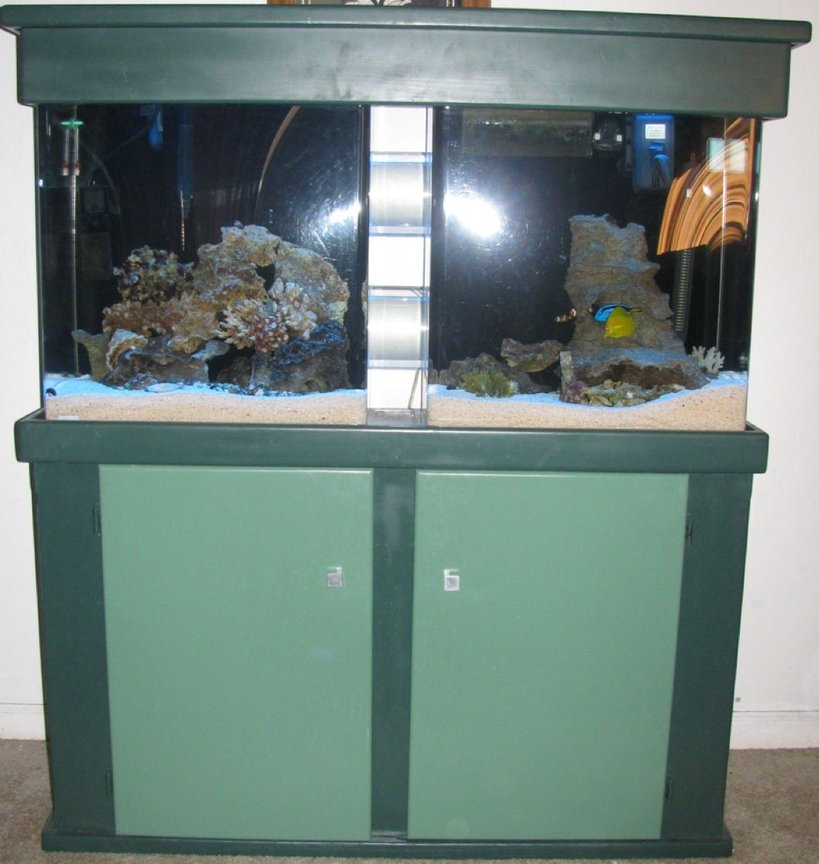 55 gallons saltwater fish tank (mostly fish, little/no live coral) - 80 gallon tube tank
