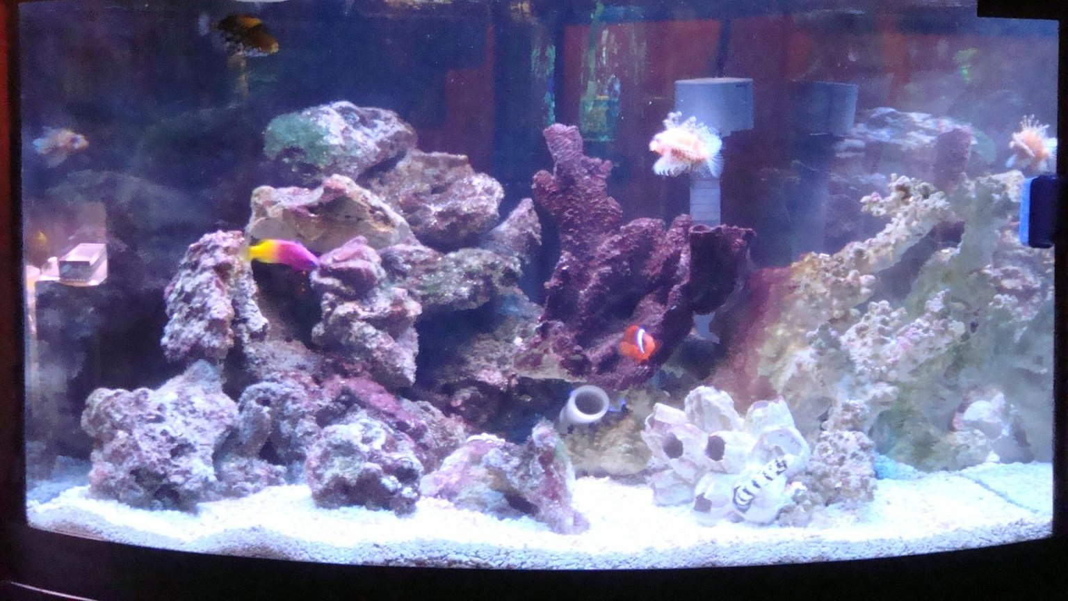 75 gallons saltwater fish tank (mostly fish, little/no live coral) - 54g corner