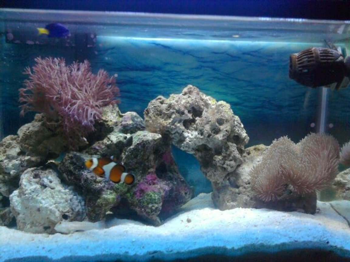 10 gallons saltwater fish tank (mostly fish, little/no live coral) - My tank