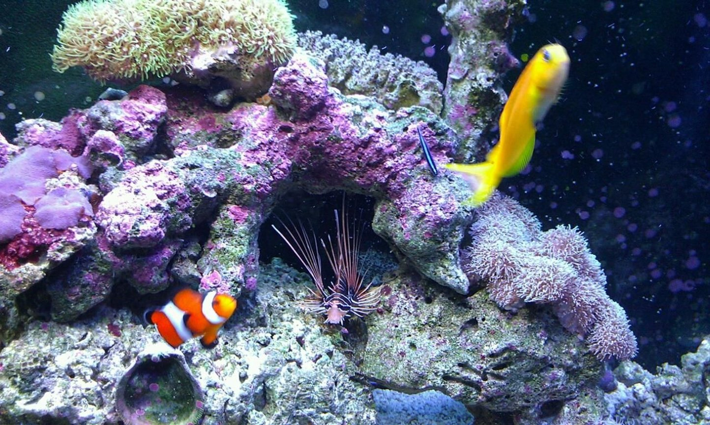 37 gallons saltwater fish tank (mostly fish, little/no live coral) - My kids