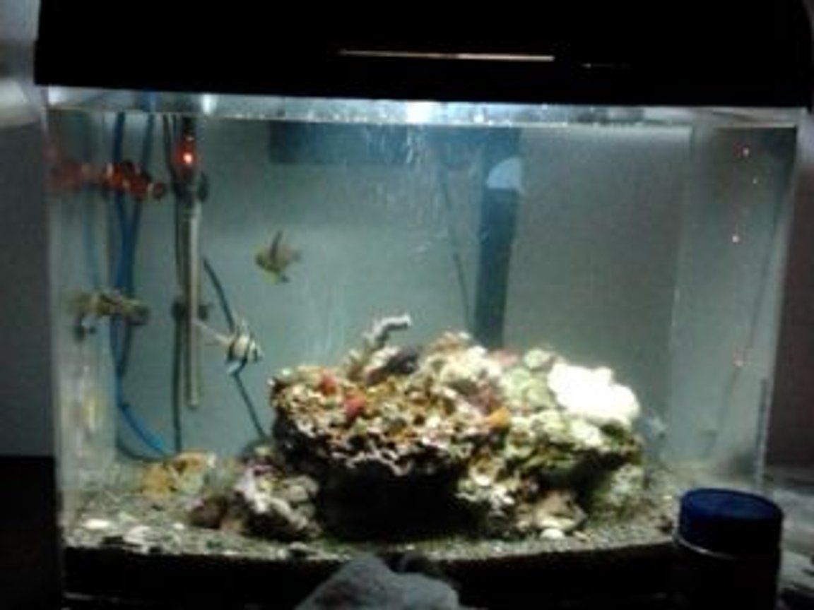65 gallons saltwater fish tank (mostly fish, little/no live coral) - Salty