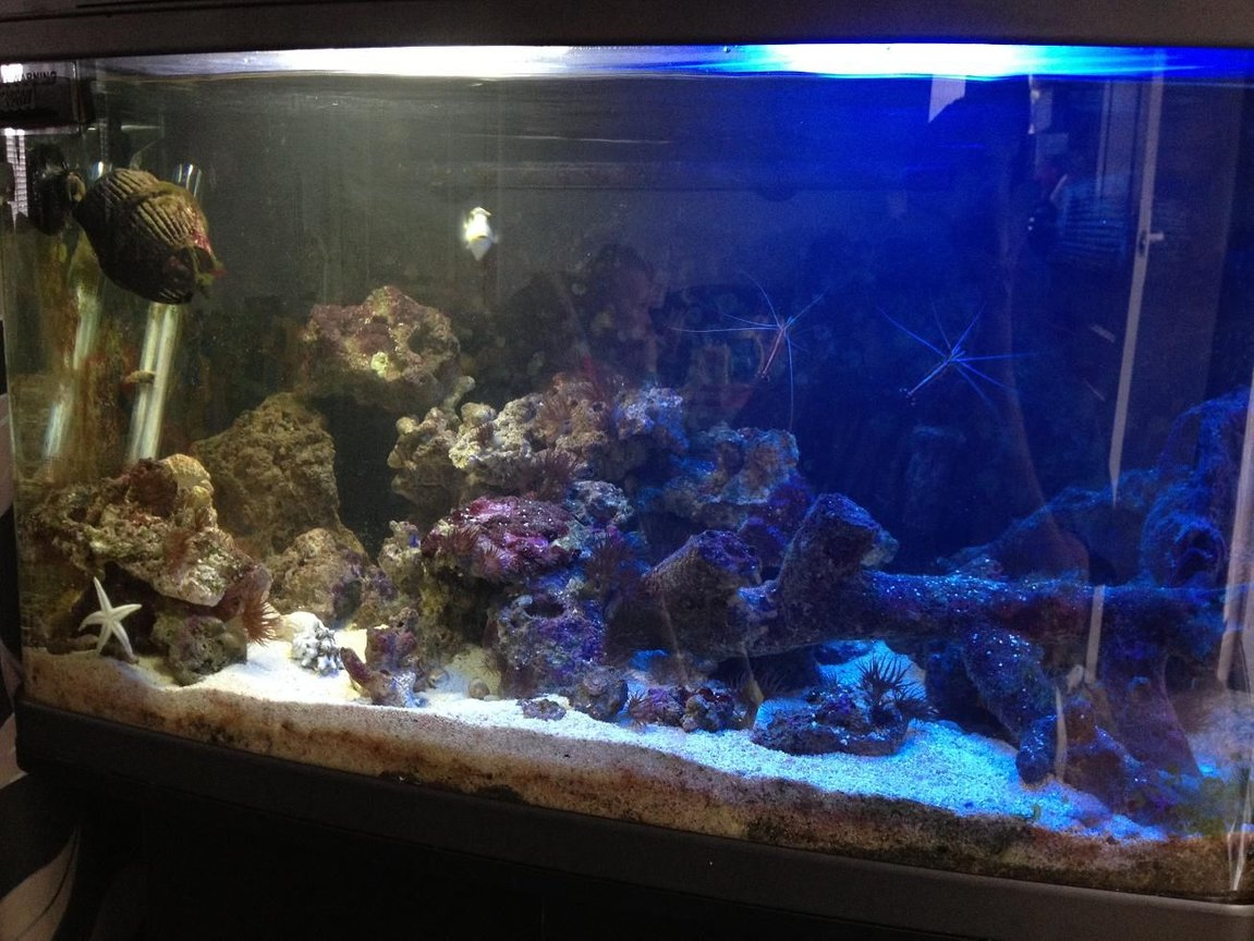 22 gallons saltwater fish tank (mostly fish, little/no live coral) - Here I have my fishbox currently housing: 1 Piccaso Triggerfish 1 Dwarf Zebra Lionfish 1 Aptasia Eating Filefish 1 Blue Spot Goby 1 Sand Shifting Starfish 2 Cleaner Shrimp 1 Peppermint Shrimp 1 Pistol Shrimp 3 Hermit Crabs All very happy at the moment and enjoying their tank.