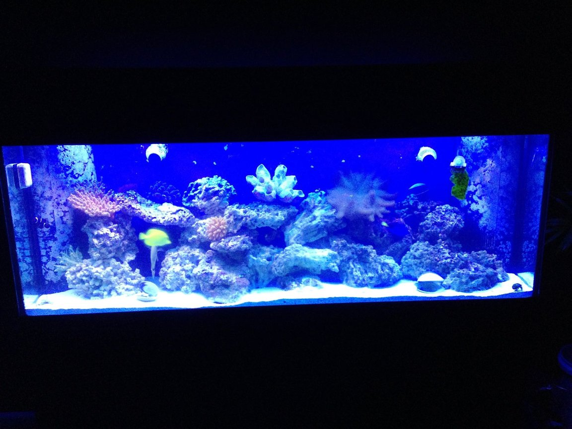 150 gallons saltwater fish tank (mostly fish, little/no live coral) - My 150