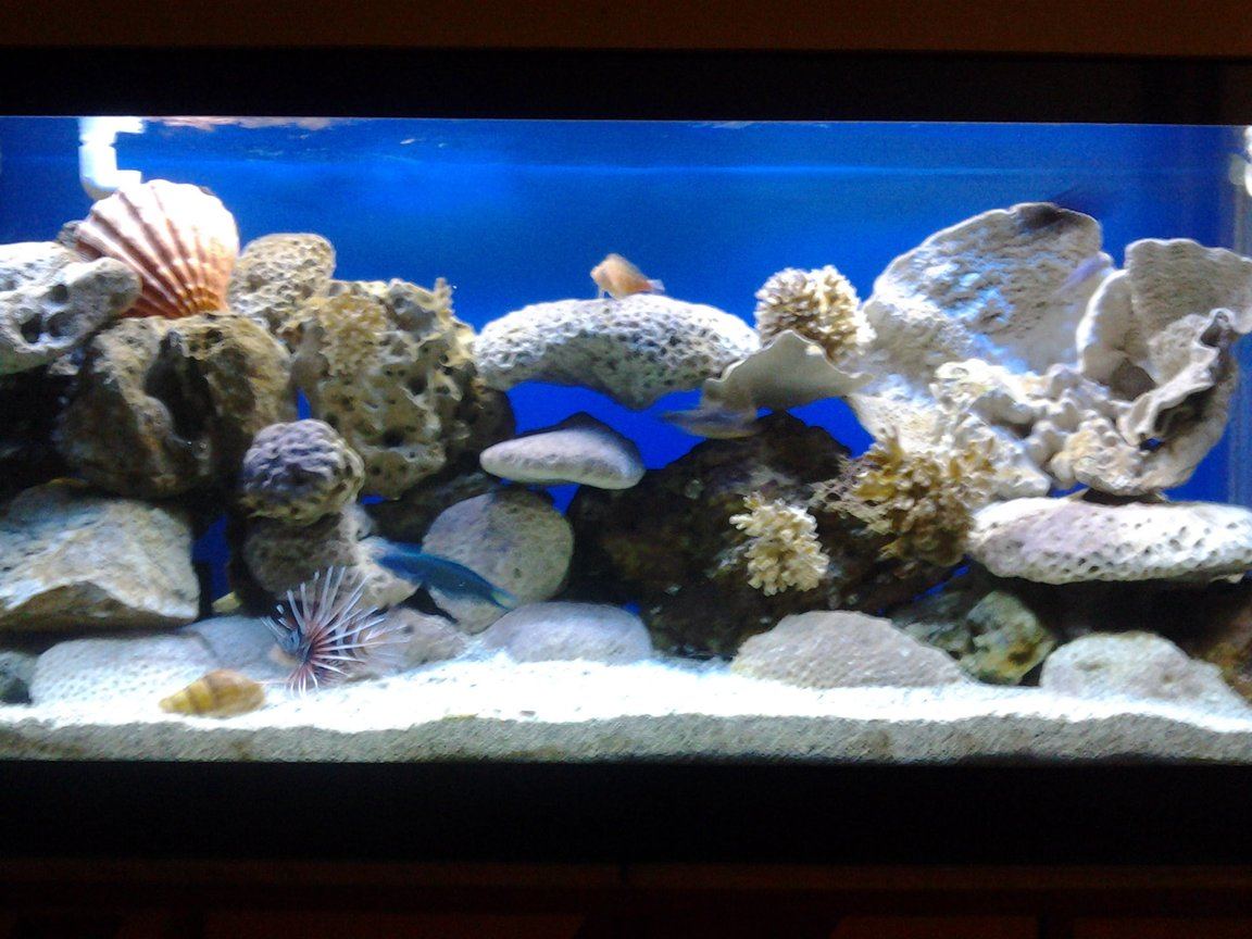 90 gallons saltwater fish tank (mostly fish, little/no live coral) - 90 gal