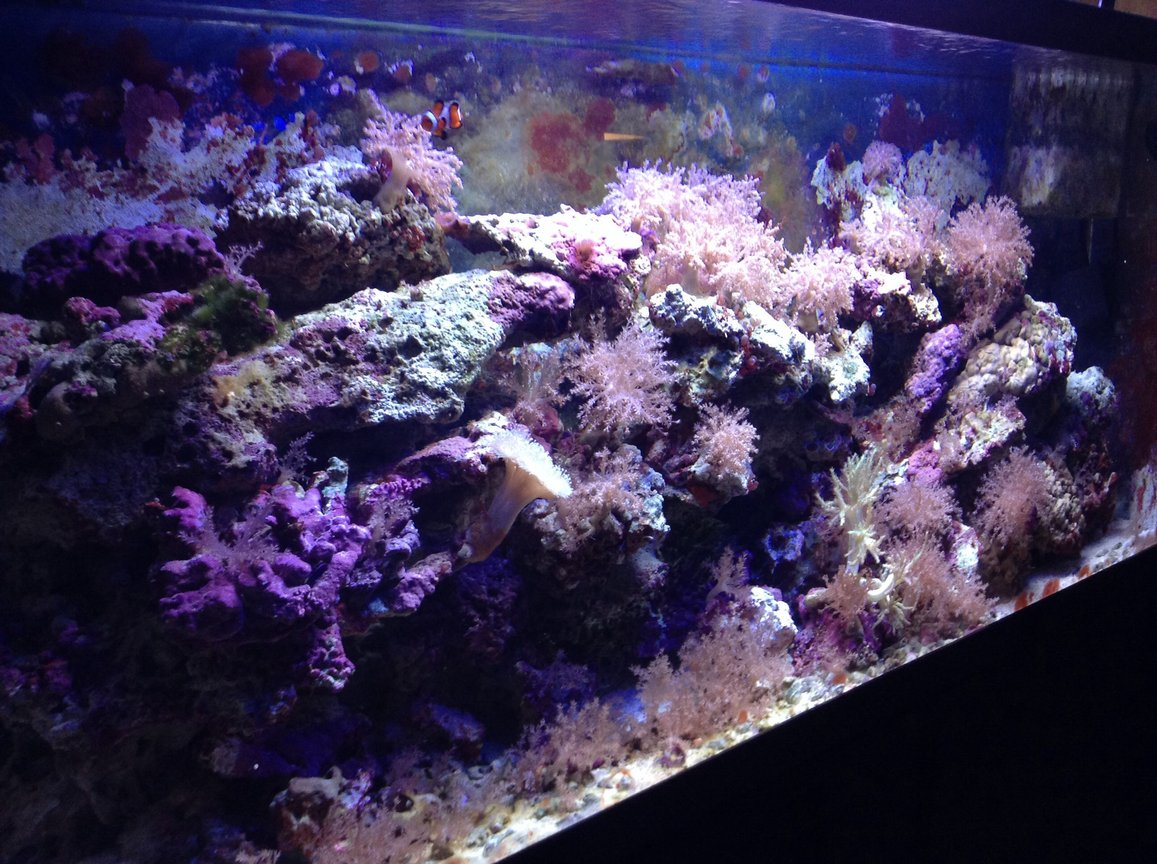 55 gallons saltwater fish tank (mostly fish, little/no live coral) - Tank