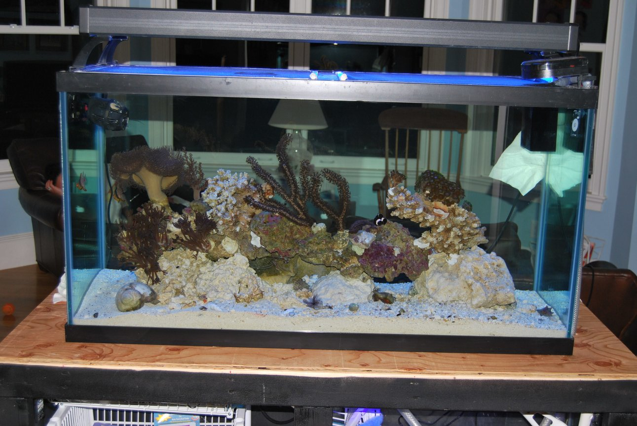 90 gallons saltwater fish tank (mostly fish, little/no live coral) - 90 gal display tank