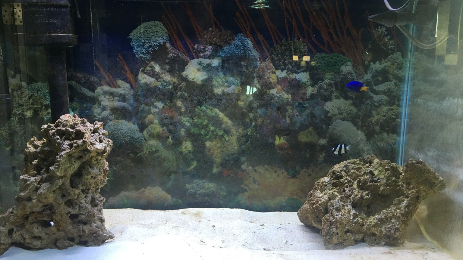 29 gallons saltwater fish tank (mostly fish, little/no live coral) - Just the beginning