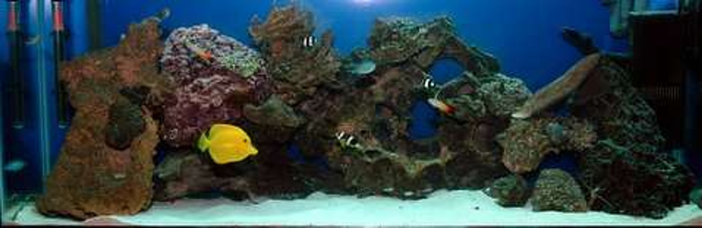 55 gallons saltwater fish tank (mostly fish, little/no live coral) - still going