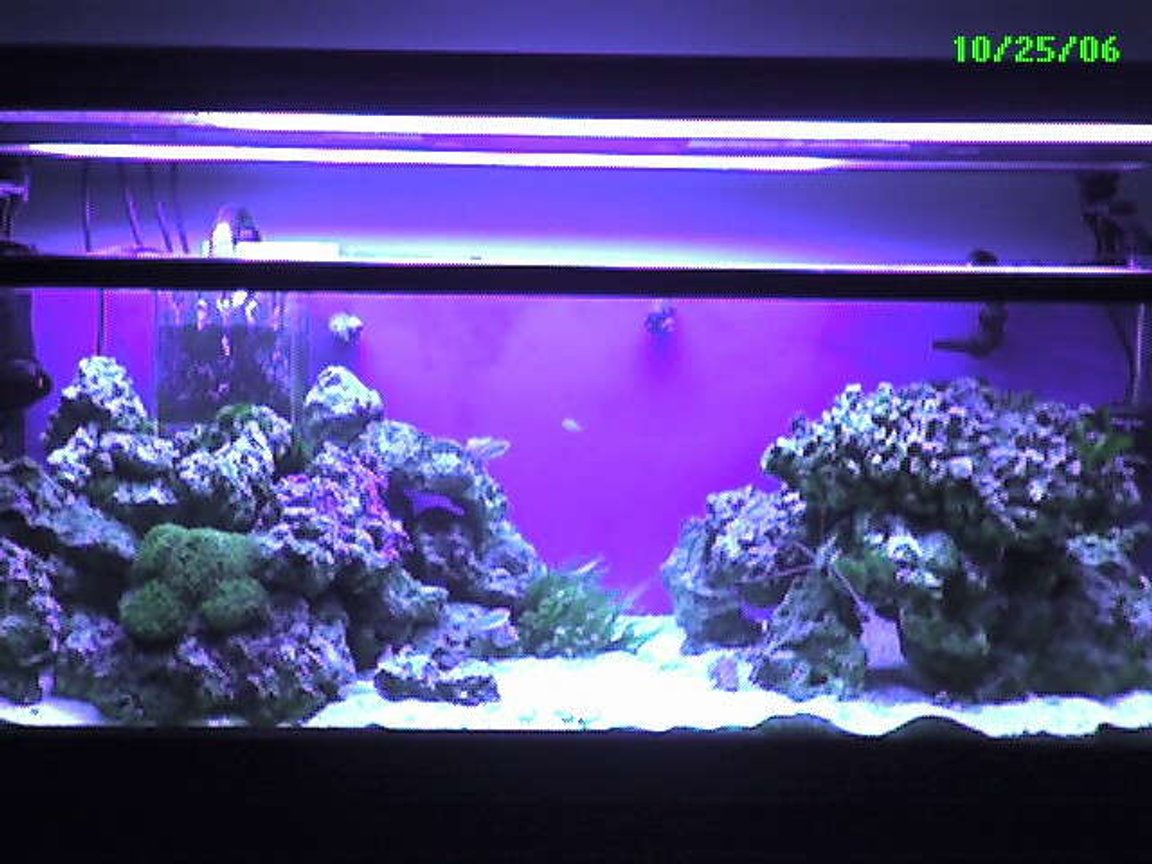 60 gallons saltwater fish tank (mostly fish, little/no live coral) - My 60 Gallon