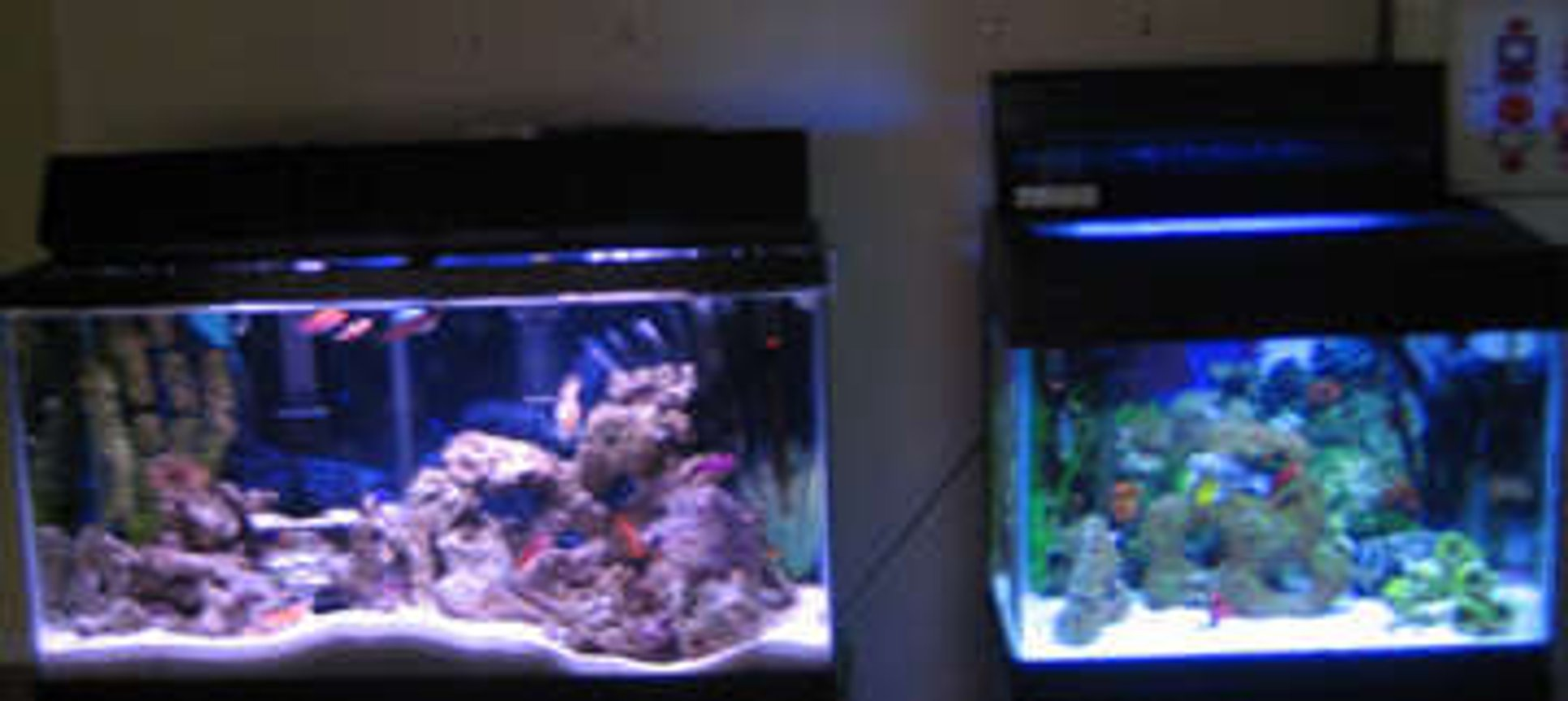 38 gallons saltwater fish tank (mostly fish, little/no live coral) - tank 1 and tank 2