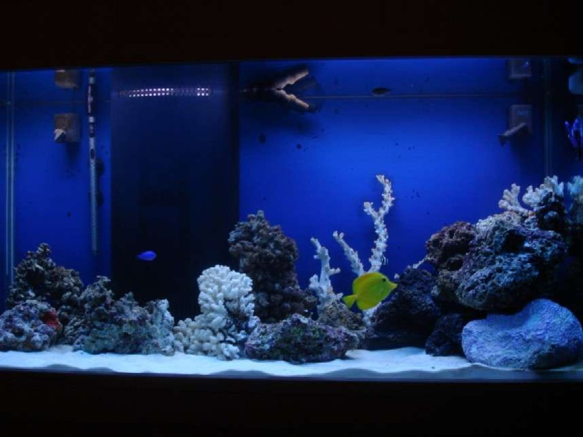 90 gallons saltwater fish tank (mostly fish, little/no live coral) - 90 gallon with live rock and sand
