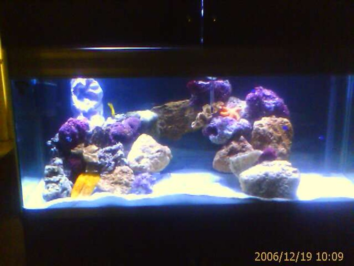 100 gallons saltwater fish tank (mostly fish, little/no live coral) - my home