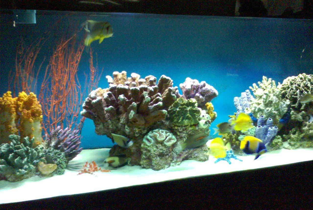 180 gallons saltwater fish tank (mostly fish, little/no live coral) - 180 gallon tank