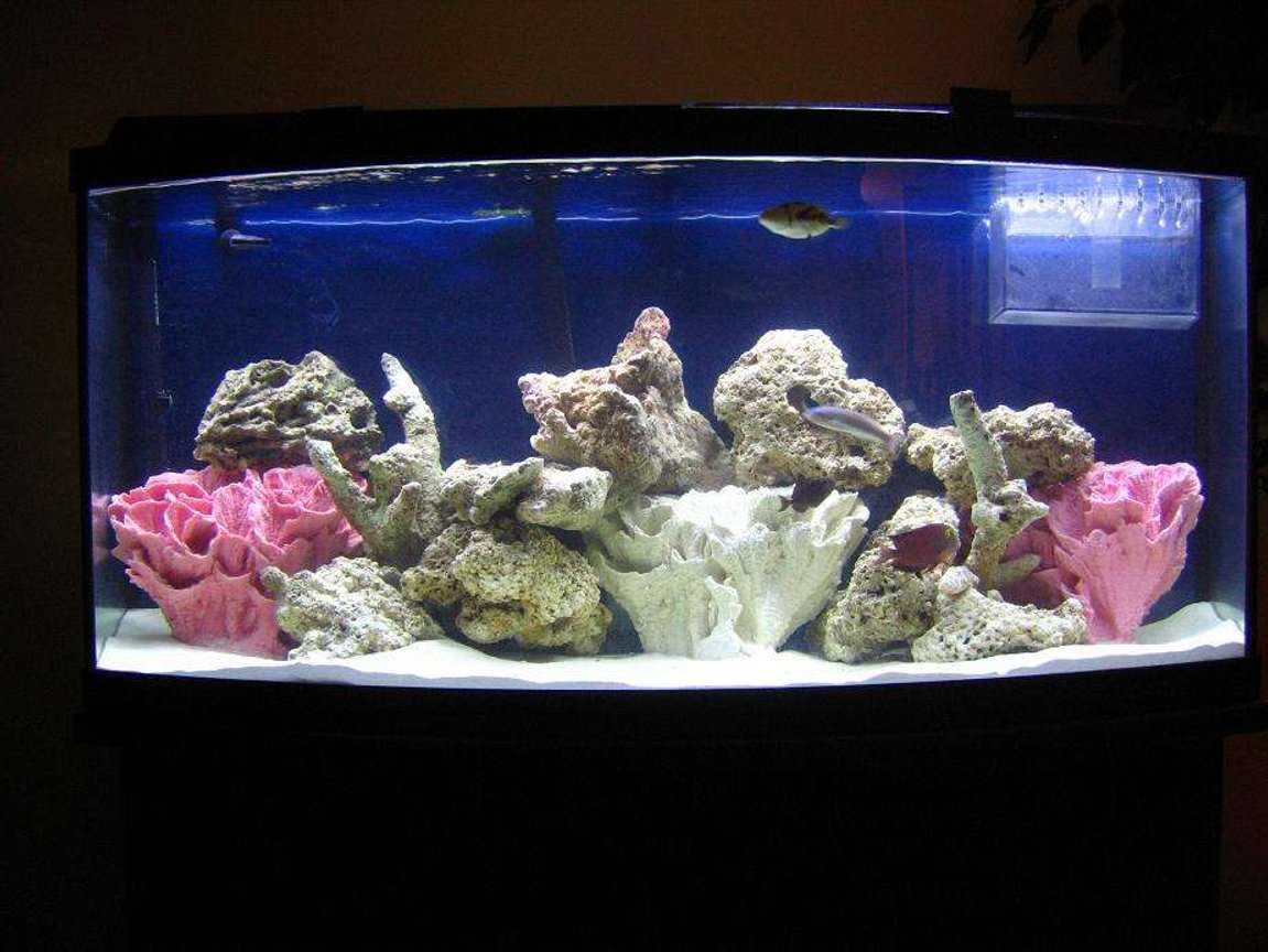 75 gallons saltwater fish tank (mostly fish, little/no live coral) - MY TANK